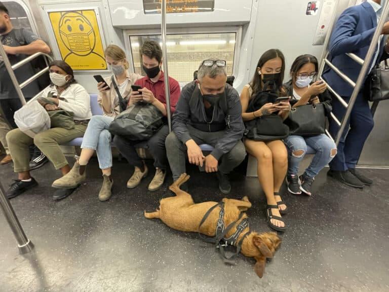Zu sehen sind Menschen, die einen Mundschutz tragen, in einer Bahn